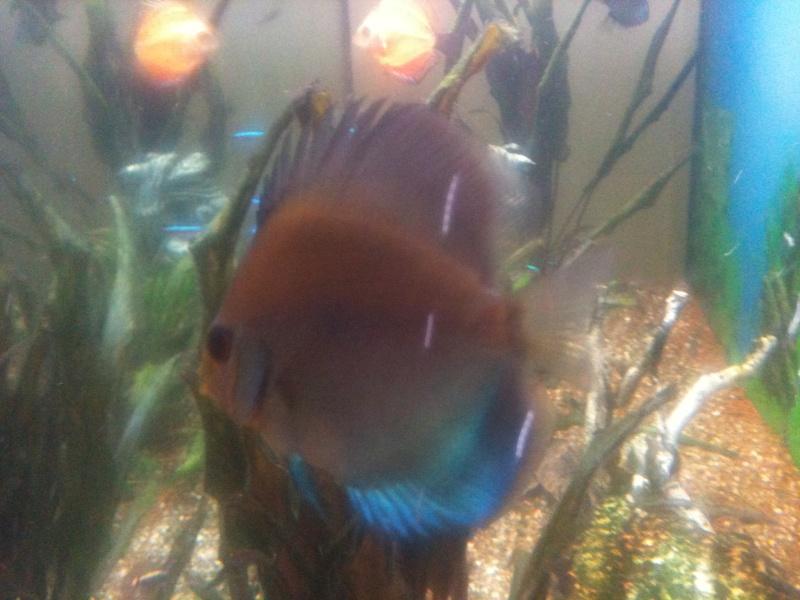 probleme aquarium Img_0118