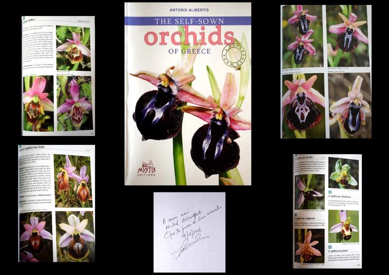 Orchids of GREECE Antoni10