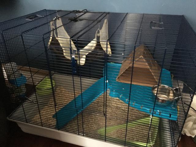 Photos de vos cages - Page 12 35720610
