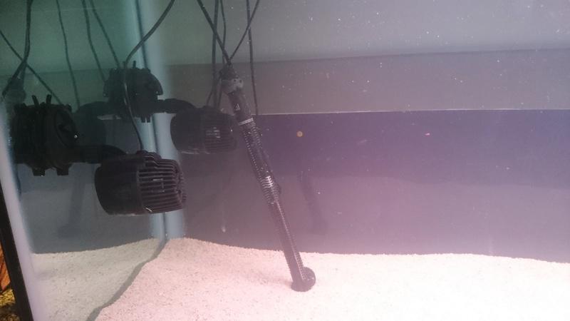 Un récifal jaubert à l'école de mes enfants. Dsc_0026