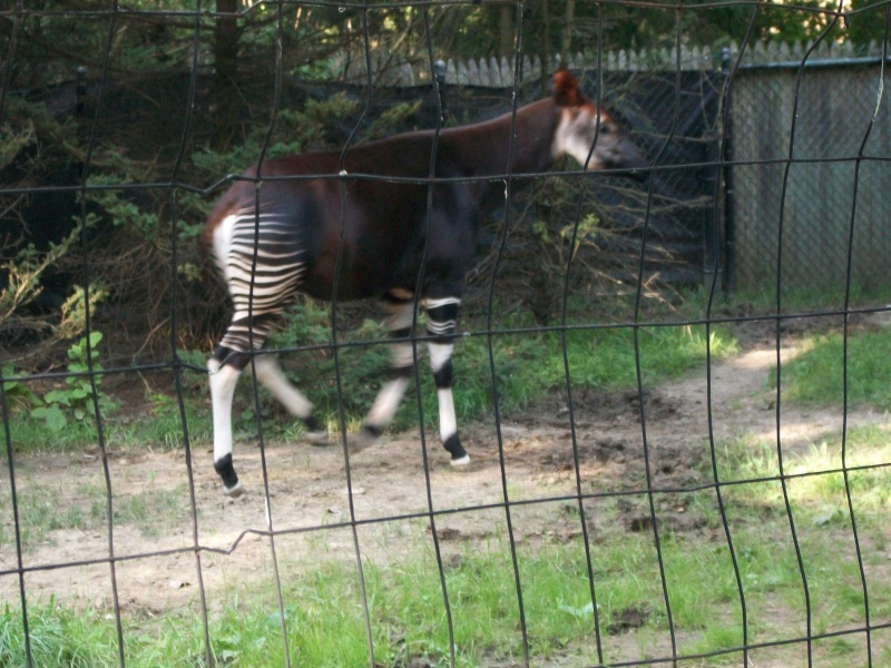 Zoo Pictures and Video 100_2111