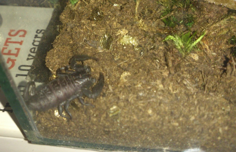 False scorpion label... (urgently need to know- no idea what climate it wants!) Scorpi10