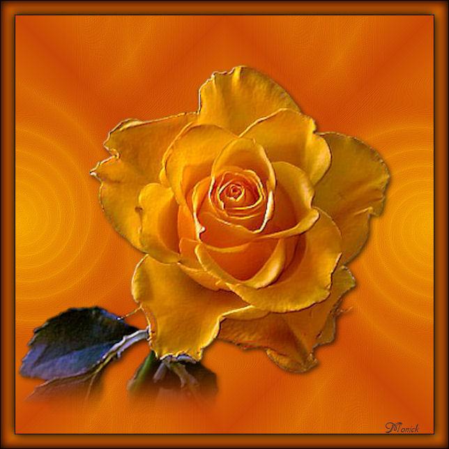 Des fleurs pour toi(Psp) Fleurs10