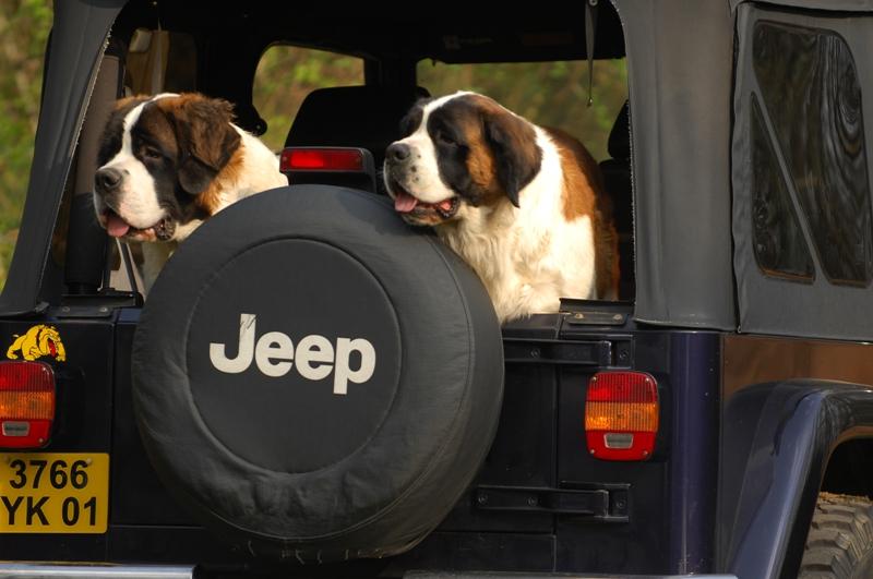nouveau gardien de ma jeep Denver10