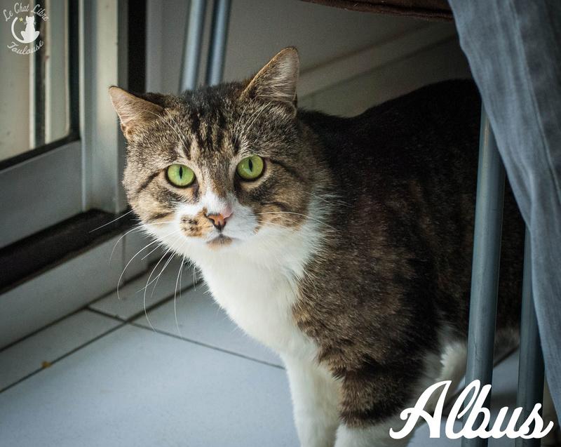 albus - ALBUS FIV+  Albus10