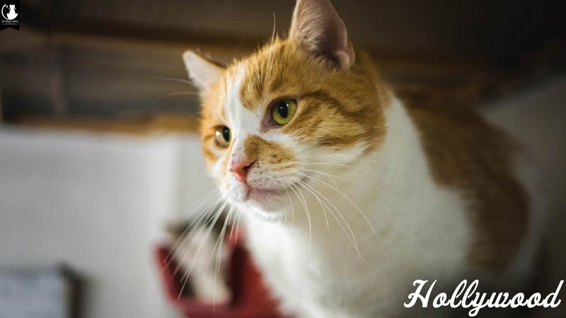 hollywood - HOLLYWOOD  Hollyw11