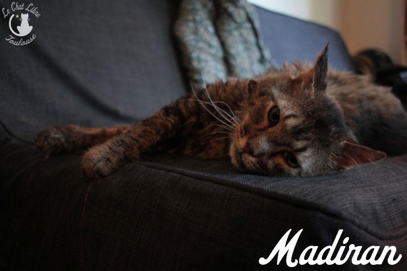 madiran - MADIRAN FIV+ Madira11