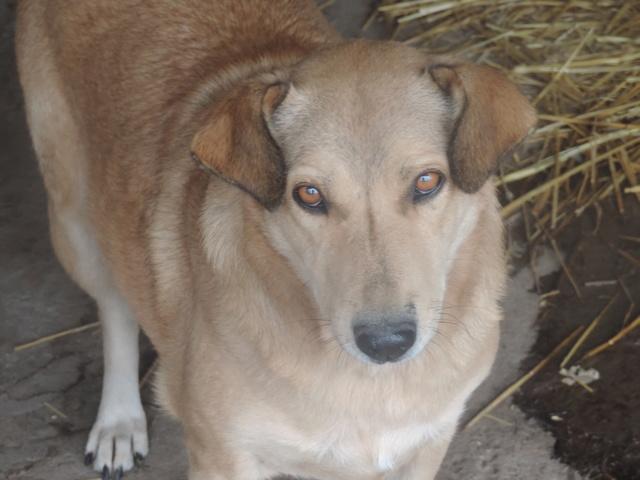 BAILEYS, née en 2011, sauvée de l'équarrissage - parrainée par Nathalie -SOS-R-SC - Page 2 Bailey11