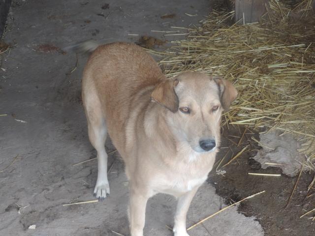 BAILEYS, née en 2011, sauvée de l'équarrissage - parrainée par Nathalie -SOS-R-SC - Page 2 Bailey12