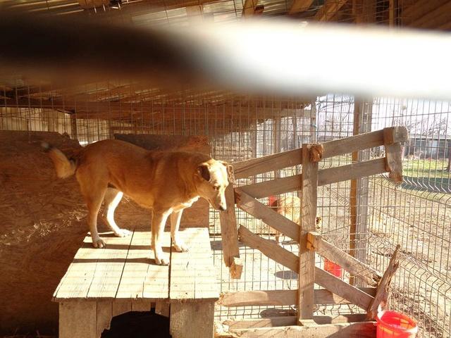 BAILEYS, née en 2011, sauvée de l'équarrissage - parrainée par Nathalie -SOS-R-SC - Page 2 Bailey14