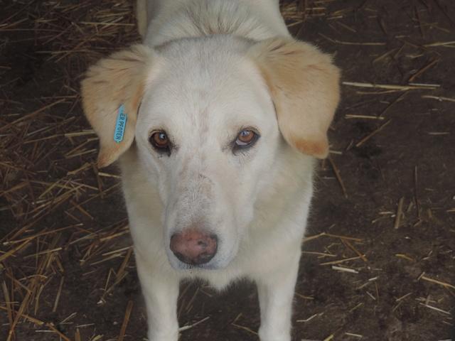 BALANUCH, mâle croisé berger sauvé de Pallady, né en 2009 parrainé par Nathalie G. -Gage Coeur  Myri_Bonnie-SC-R-SOS- Balanu10