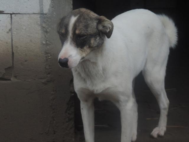 IRIS, née en 2015 - sauvée de la rue - Parrainée par Perdita -  OANA -SC-R-SOS- Nouvea66