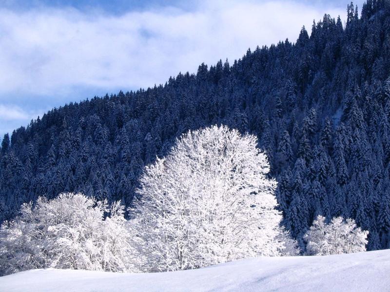 Entre Léman et Mont-Blanc Noel_c13