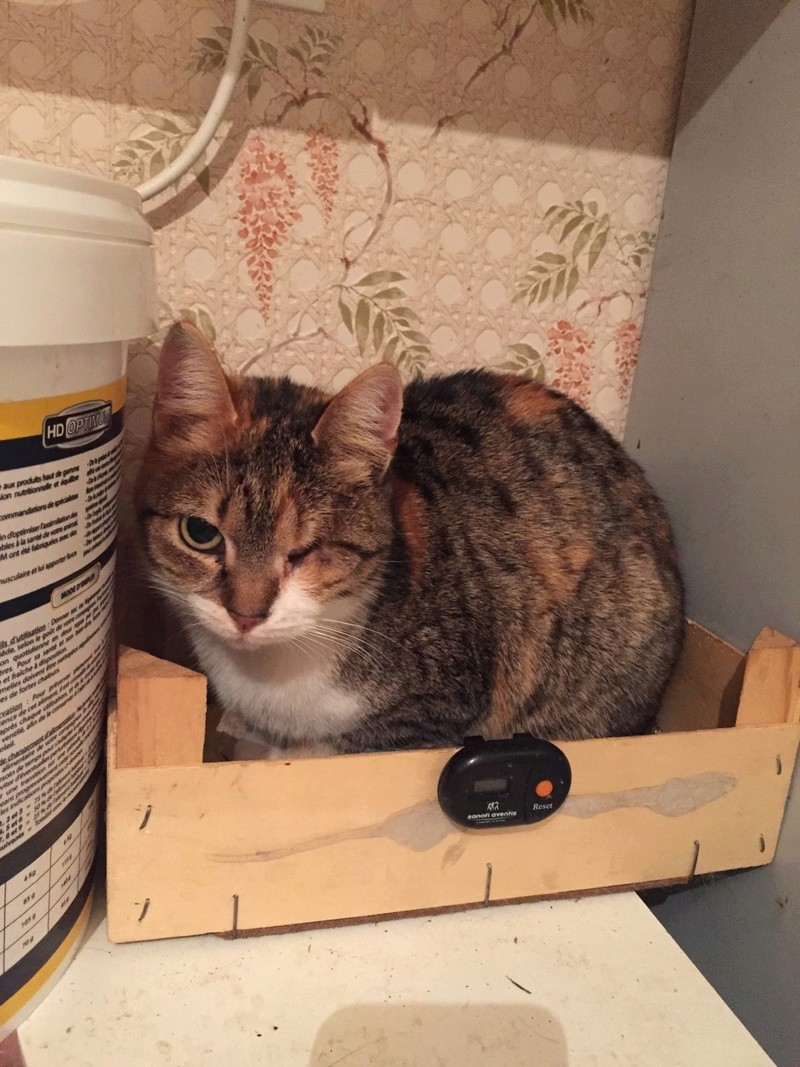 DUCHESSE - chatte femelle, née 2011/2012, borgne - (PASCANI) - adoptée par Chantal Pascal (dpt 63) - Page 5 17310