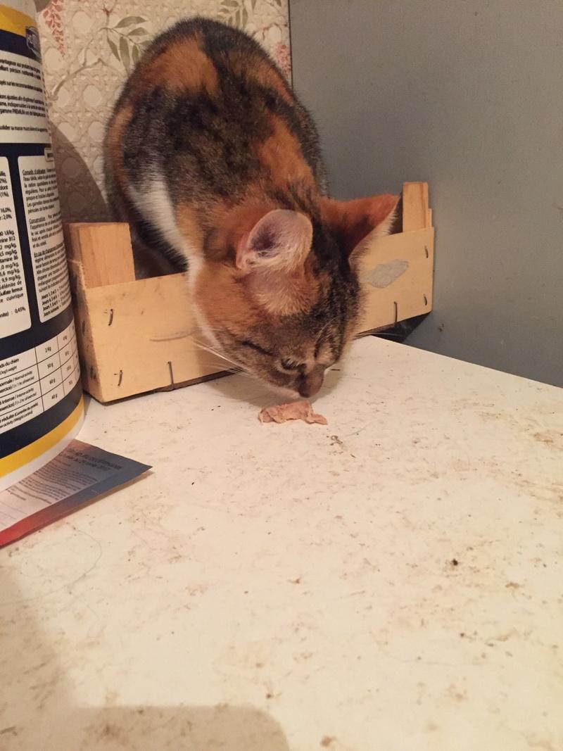 DUCHESSE - chatte femelle, née 2011/2012, borgne - (PASCANI) - adoptée par Chantal Pascal (dpt 63) - Page 5 17410