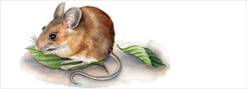 Les animaux peints à l'AQUARELLE - Page 3 A_00135