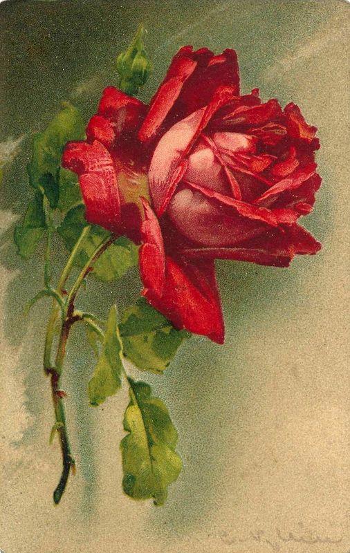 Le doux parfum des roses - Page 6 A_00213