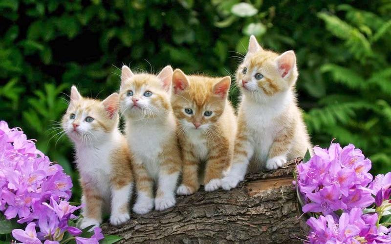 Les chats - Page 23 A_0063
