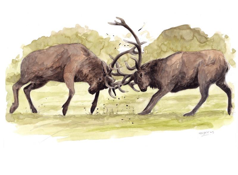 Les animaux peints à l'AQUARELLE Aq10