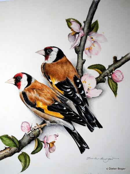 Les animaux peints à l'AQUARELLE - Page 4 Aq_ch10