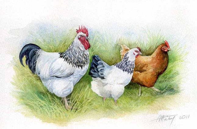 Les animaux peints à l'AQUARELLE Aq_f10