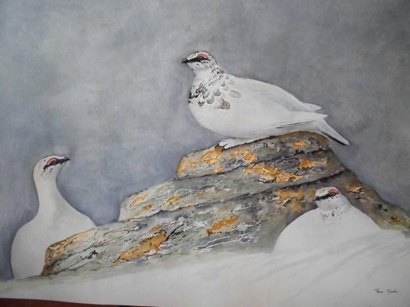 Les animaux peints à l'AQUARELLE - Page 2 Aq_k11