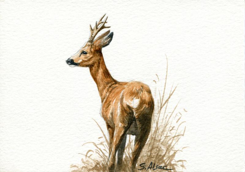 Les animaux peints à l'AQUARELLE - Page 2 Aq_l11