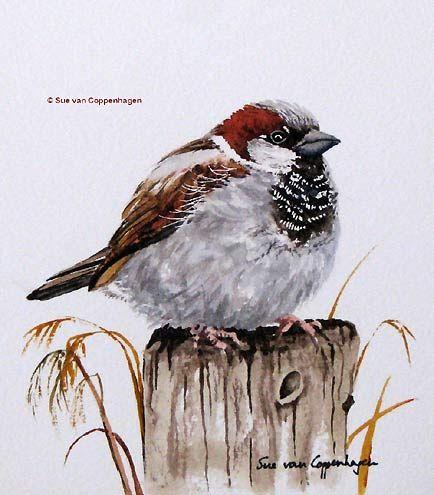 Les animaux peints à l'AQUARELLE - Page 3 Aq_mo10