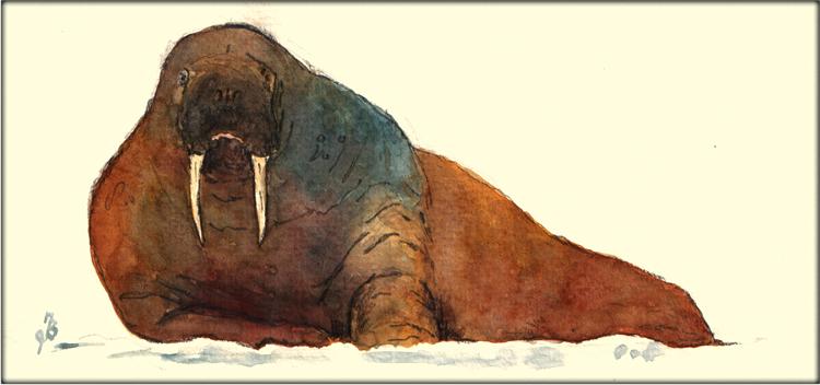 Les animaux peints à l'AQUARELLE - Page 4 Aq_mo11