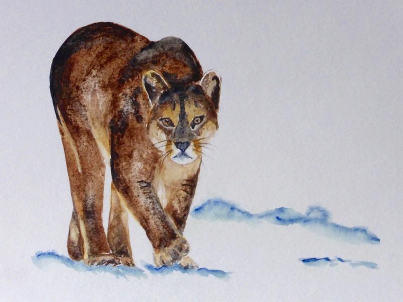 Les animaux peints à l'AQUARELLE - Page 4 Aq_r14
