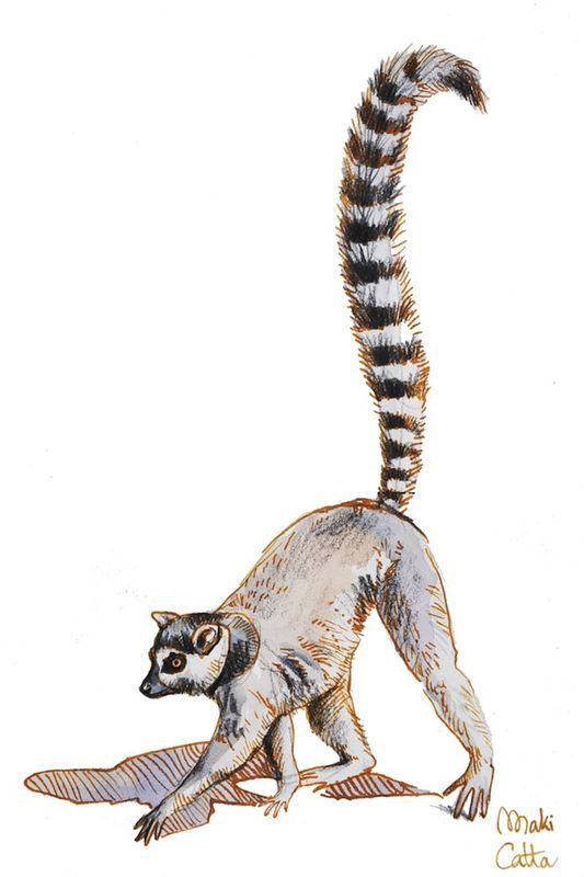 Les animaux peints à l'AQUARELLE - Page 2 Aq_s11