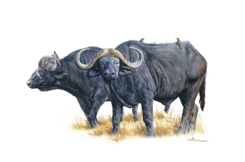 Les animaux peints à l'AQUARELLE - Page 2 Aq_v10
