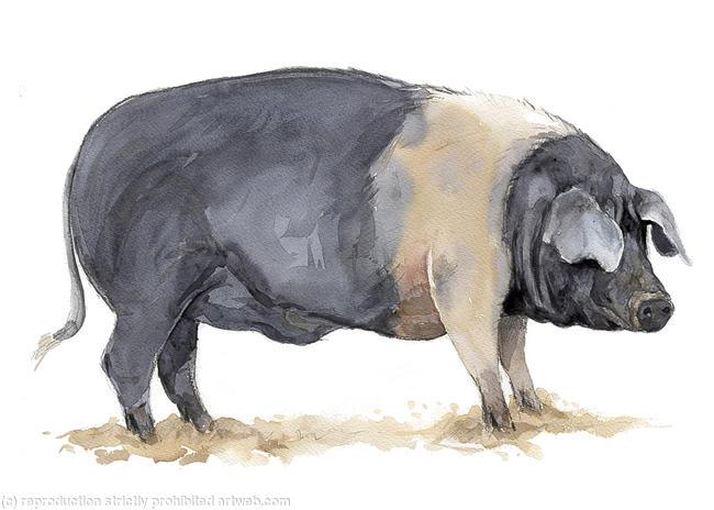 Les animaux peints à l'AQUARELLE - Page 3 Aq_v11