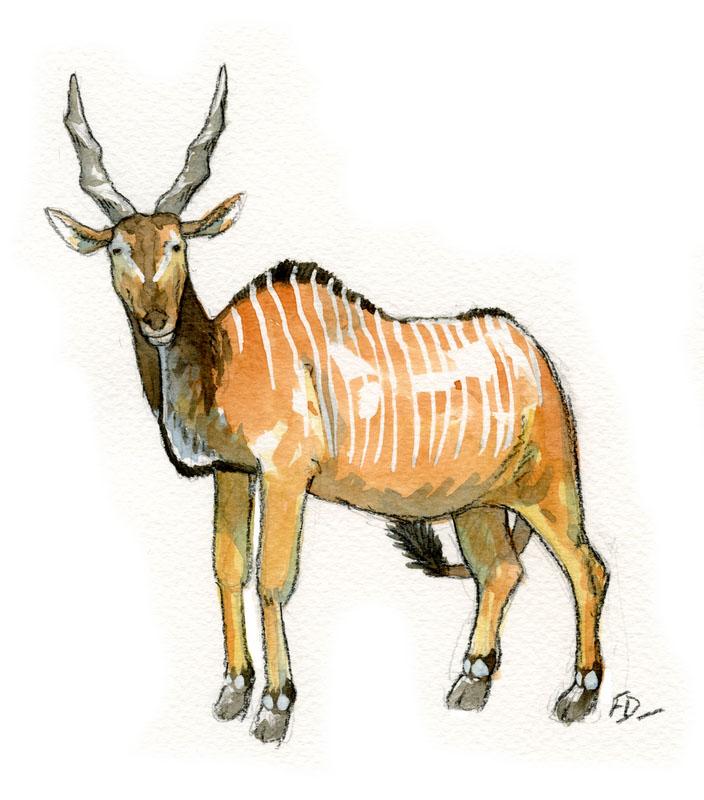 Les animaux peints à l'AQUARELLE - Page 2 Aq_xx10