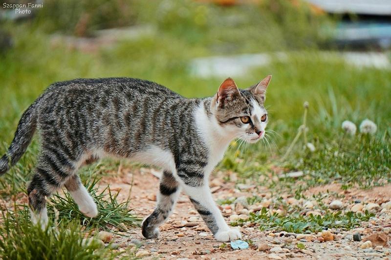 Les chats - Page 23 Cha_b10