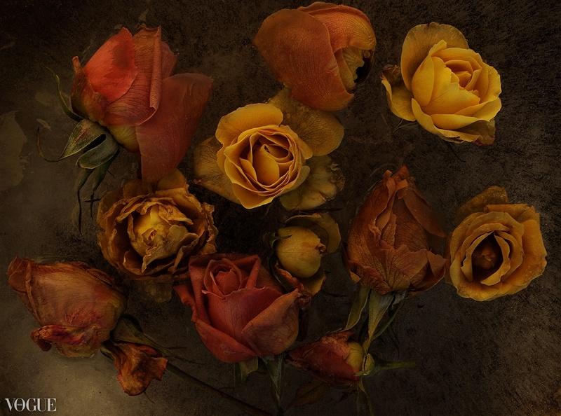 Le doux parfum des roses - Page 4 Ro_a10