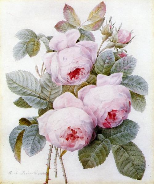 Le doux parfum des roses - Page 4 Ro_l10