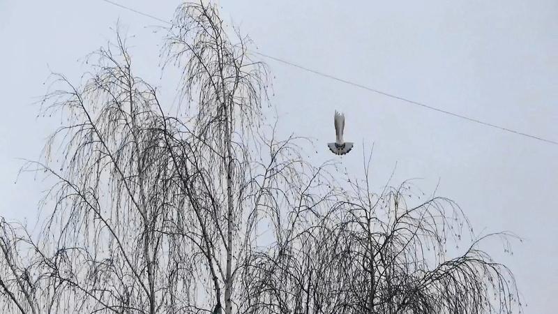 Птица Мальцева Владимира Томск  Image_14
