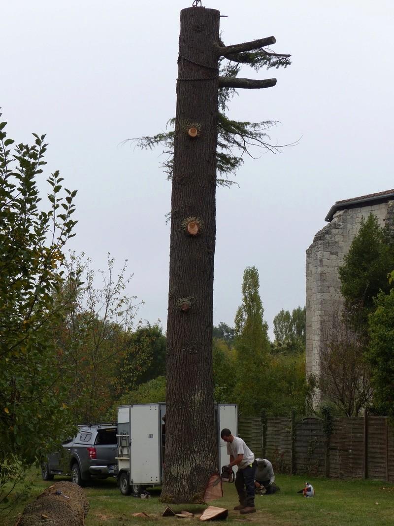 [Identification de bois] Mais qu'est-ce que cèdre ? - Page 2 P1040010