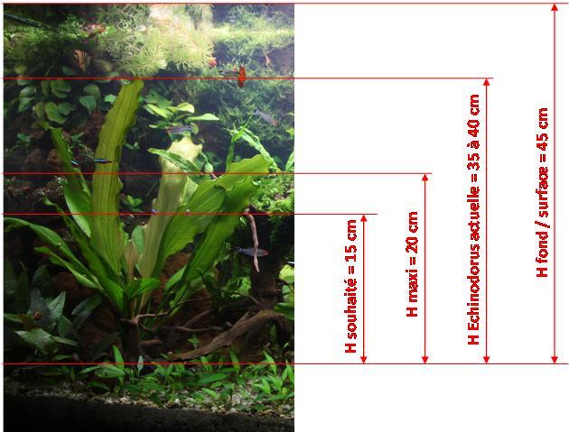 Besoin de conseil de connaisseur - choix d'une plante Taille10