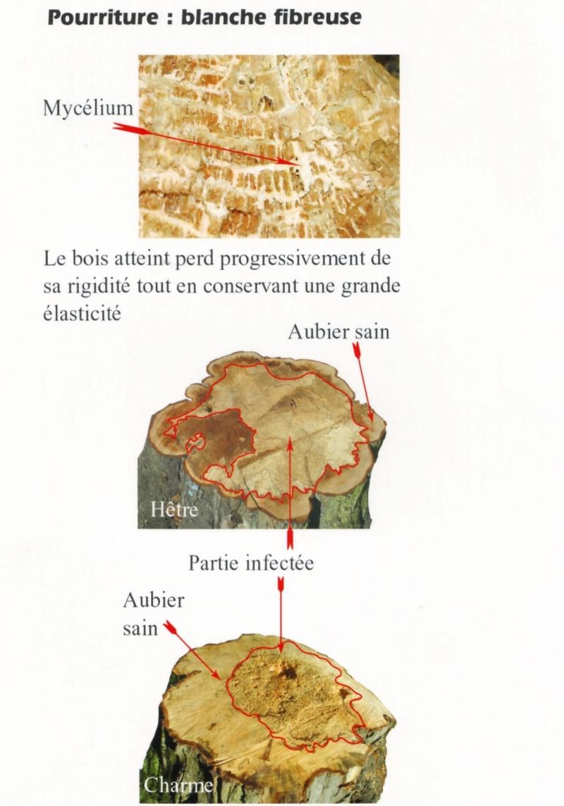 Identification champignon Pourri10