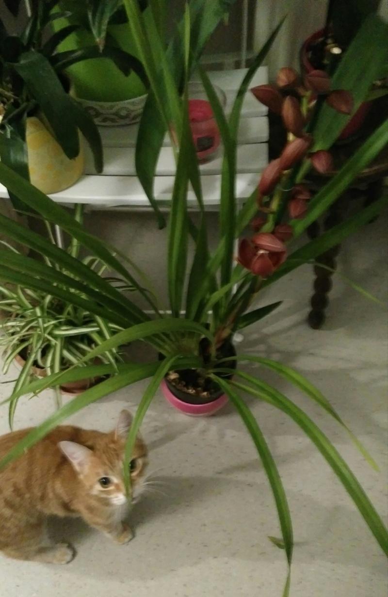 Est-ce bien une orchidée ? Img_2010