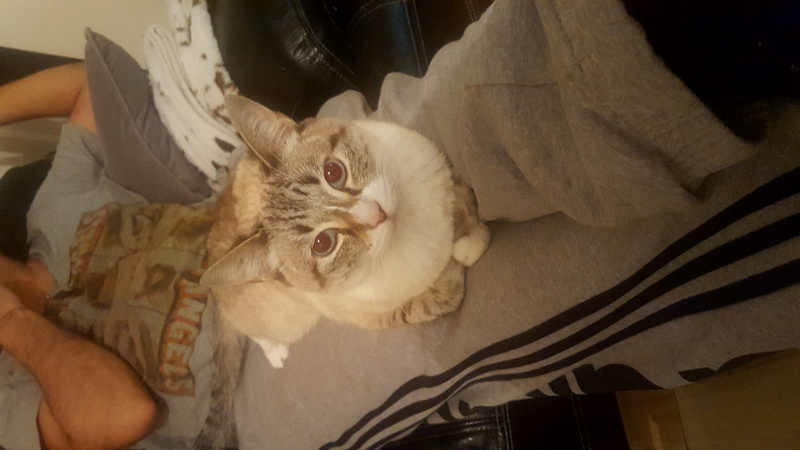 Dexter (Mister Chaton)  - Page 2 20161210