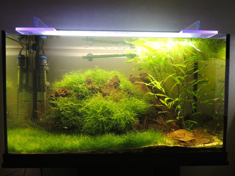 Les plantes aquatiques Dscn2515