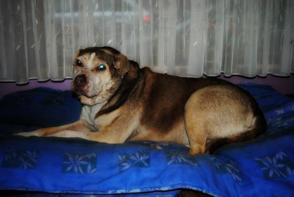 BALZAC - mâle croisé- taille moyenne né en 2008  (PASCANI) - en FA chez Yazou (Belgique) adopté par Cindy (Belgique) - Page 5 Dsc_0210
