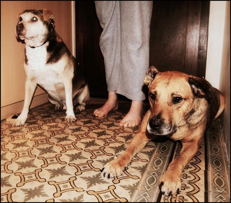 BALZAC - mâle croisé- taille moyenne né en 2008  (PASCANI) - en FA chez Yazou (Belgique) adopté par Cindy (Belgique) - Page 5 Dsc_0212