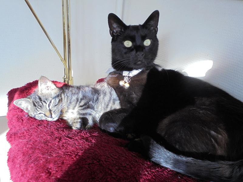 Mon chat adore la Traviata 00410