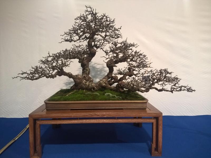 Noelander 2017 , un mercato di bonsai e yamadori esagerato Tony10