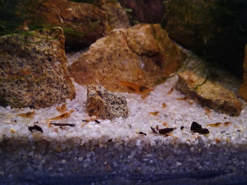 presentation aquarium Img_2011