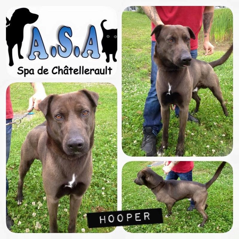 Hooper XSharpei 5 ans (86) SPA de Chatellerault Hooper12